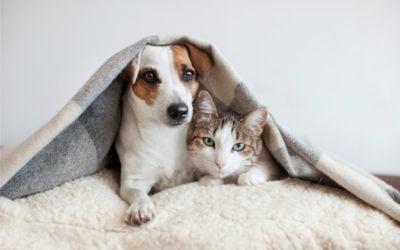 Ciproeptadina em Cães e Gatos