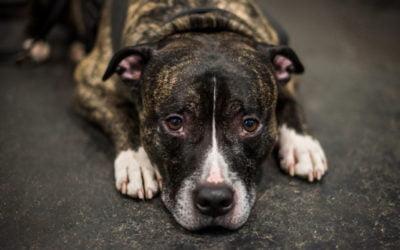 Nova Combinação Nutracêutica na Osteoartrite Canina