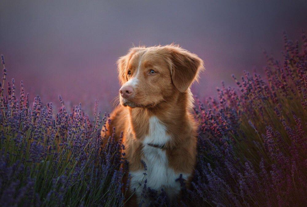 Uso de Floral de Bach em Cães – Solidão