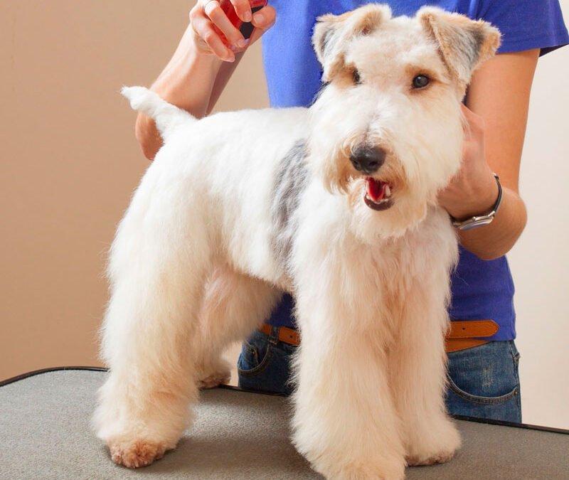 Ácidos Graxos Tópicos para Cães e Suas Utilizações
