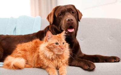 Imunomodulador em Cães e Gatos