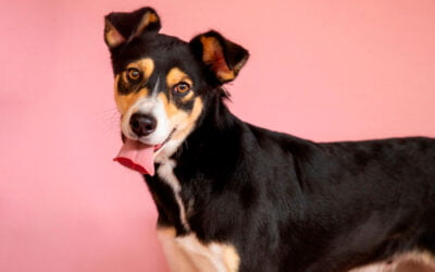 Tratamento Coadjuvante na Dermatite em Cães