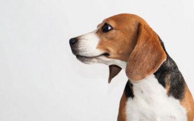 Anormalidades Cardiovasculares em Cães
