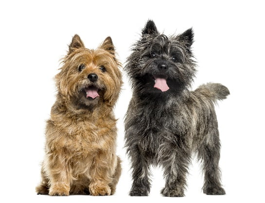 Gengivite em Cães